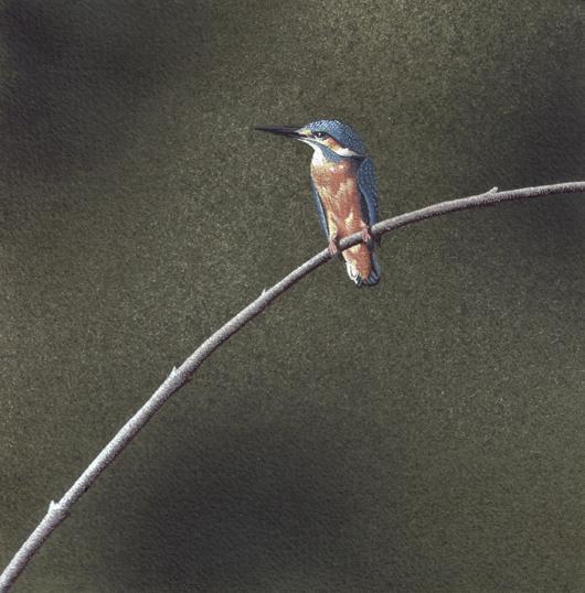 Martin pescatore, 2010, tecnica mista su carta, cm 20x20