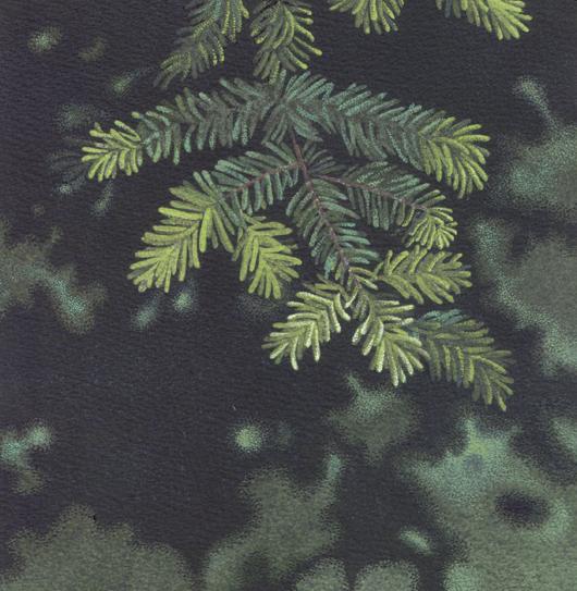 Abete, 2010, tecnica mista su carta, cm 20x20