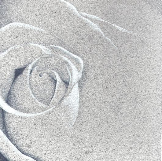 Rosa 3, 2010, tecnica mista su carta, cm 20x20