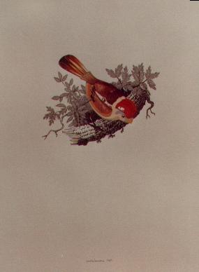 Uccellino di latta, 1980, acquerello, cm 25x30