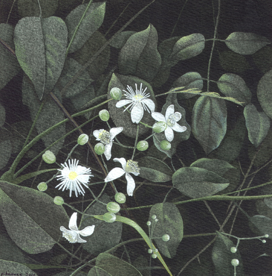 Vitalba, 2010, tecnica mista su carta, cm 20x20