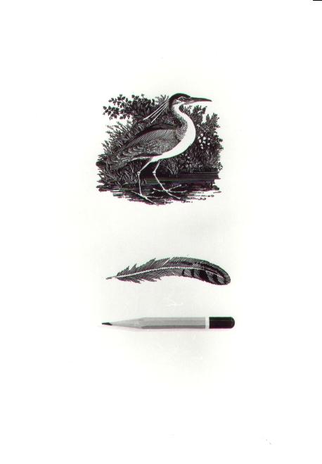 Matita e penna, 1980, acquerello, cm 20x30